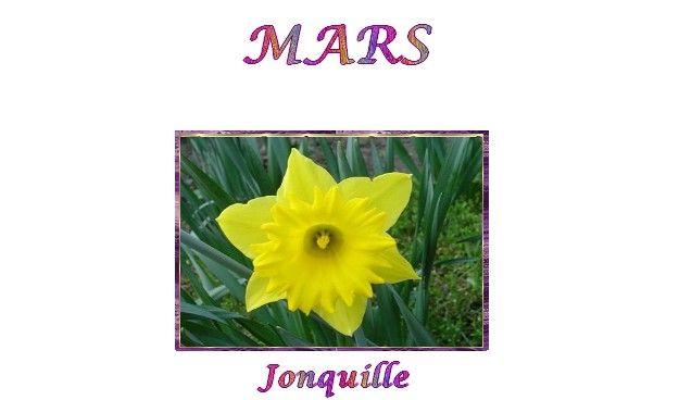 fleurs-mois de mars&bientôt,leprintemps&chanson*